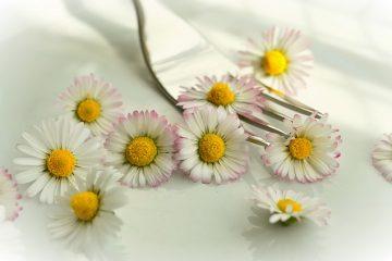 spiselig-daisy