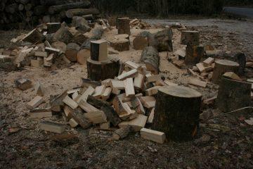 Fældning af træer i Roskilde - Få 3 gratis tilbud