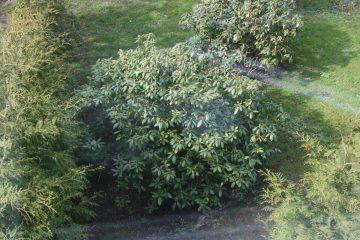 Billig træfældning af træer Amager med 3 gratis tilbud